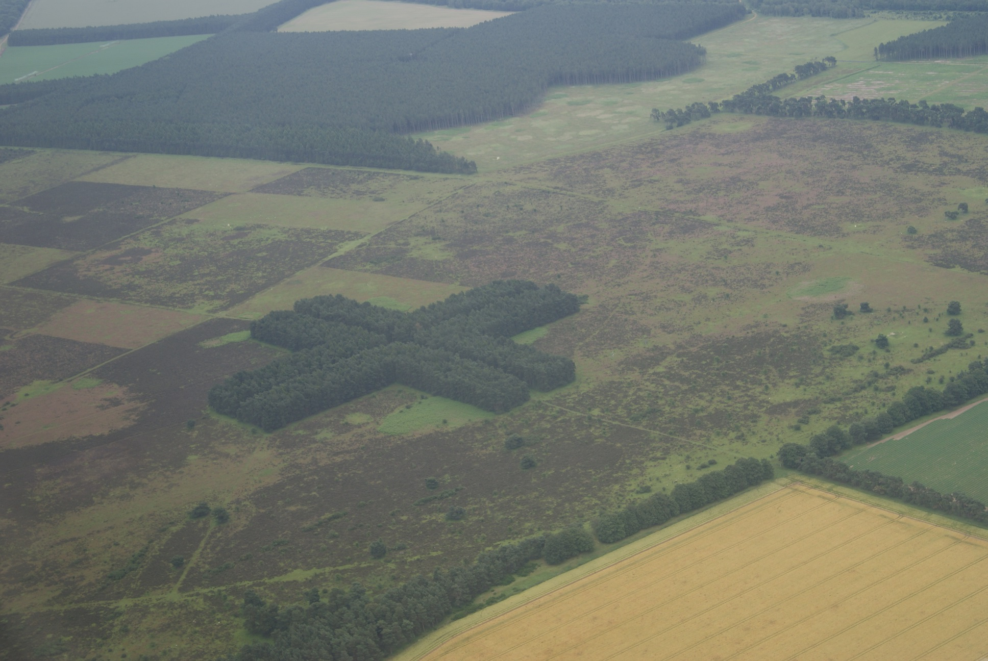 Thetford Forest, Structured from the sky.